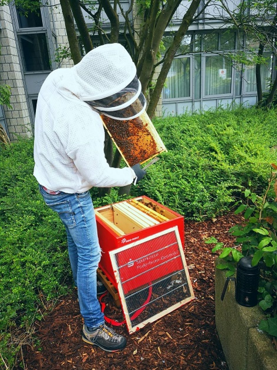 Wie kommen die Bienen durch den Winter?